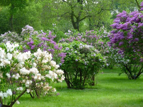 arbustes a fleurs jardiland la ravoire la ravoire 73490. Black Bedroom Furniture Sets. Home Design Ideas